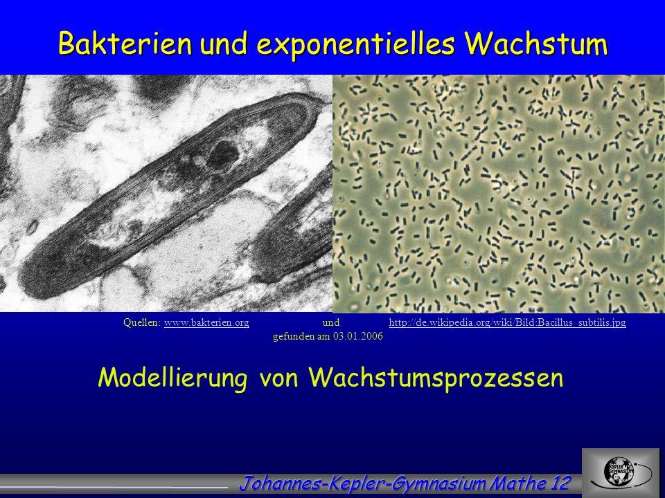 Bakterien und exponentielles Wachstum