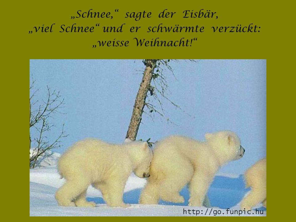 """""""Schnee, sagte der Eisbär, """"viel Schnee und er schwärmte verzückt:"""