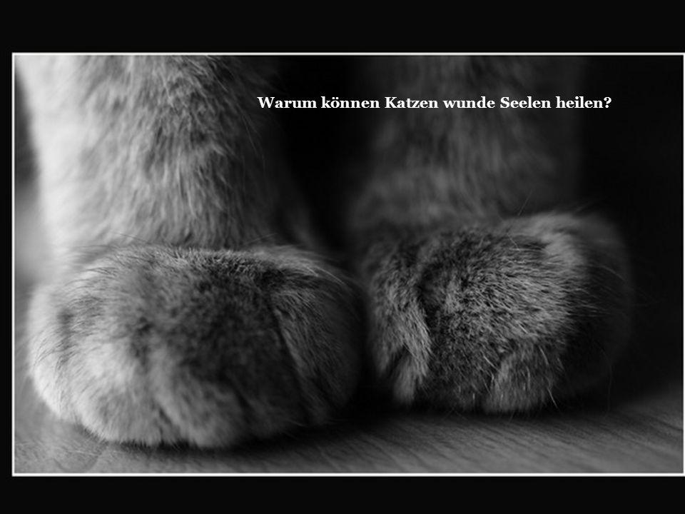 Warum können Katzen wunde Seelen heilen
