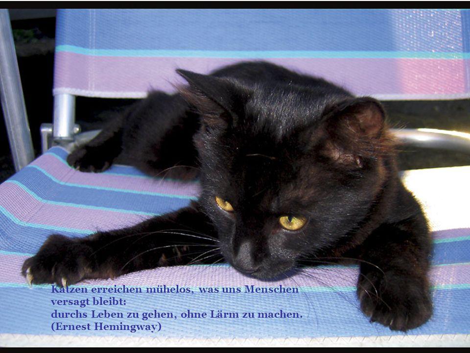 Katzen erreichen mühelos, was uns Menschen versagt bleibt: durchs Leben zu gehen, ohne Lärm zu machen.