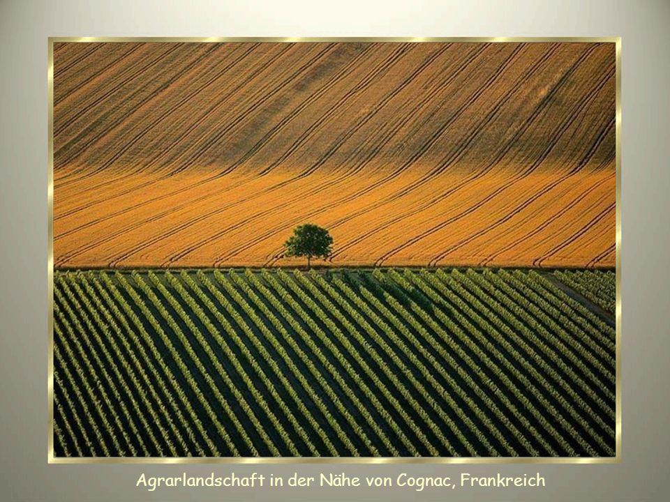 Agrarlandschaft in der Nähe von Cognac, Frankreich