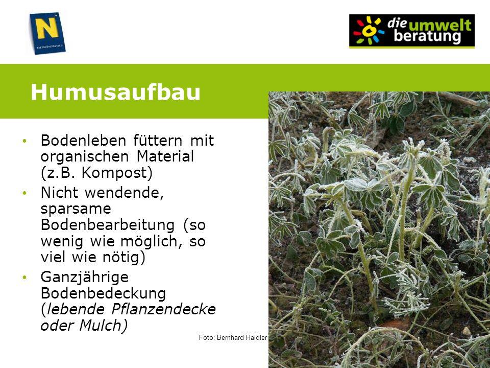 Humusaufbau Bodenleben füttern mit organischen Material (z.B. Kompost)