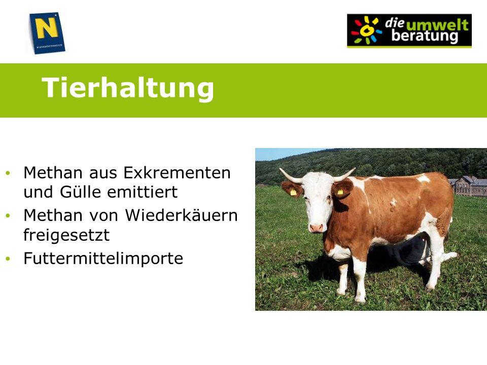 Tierhaltung Methan aus Exkrementen und Gülle emittiert