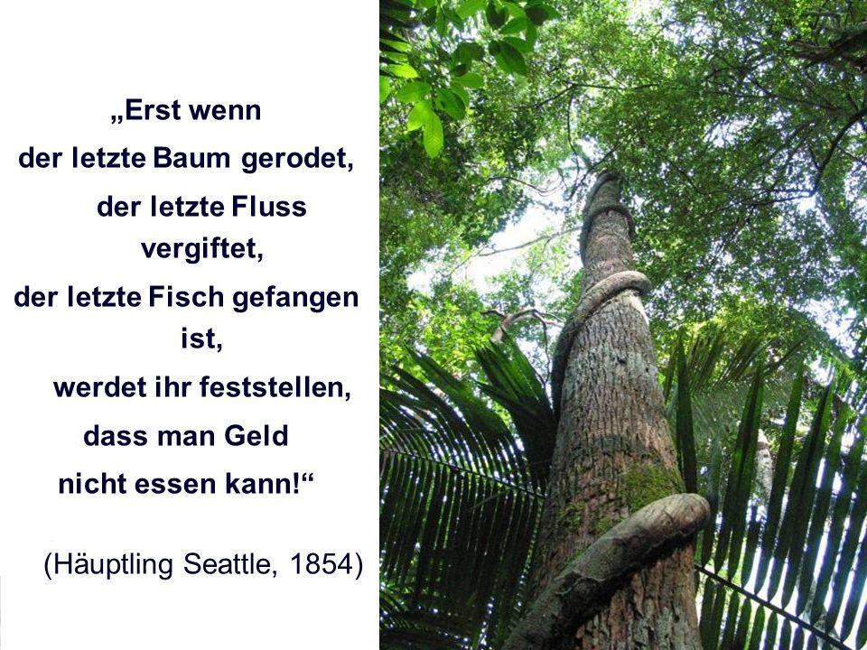 der letzte Baum gerodet, der letzte Fluss vergiftet,