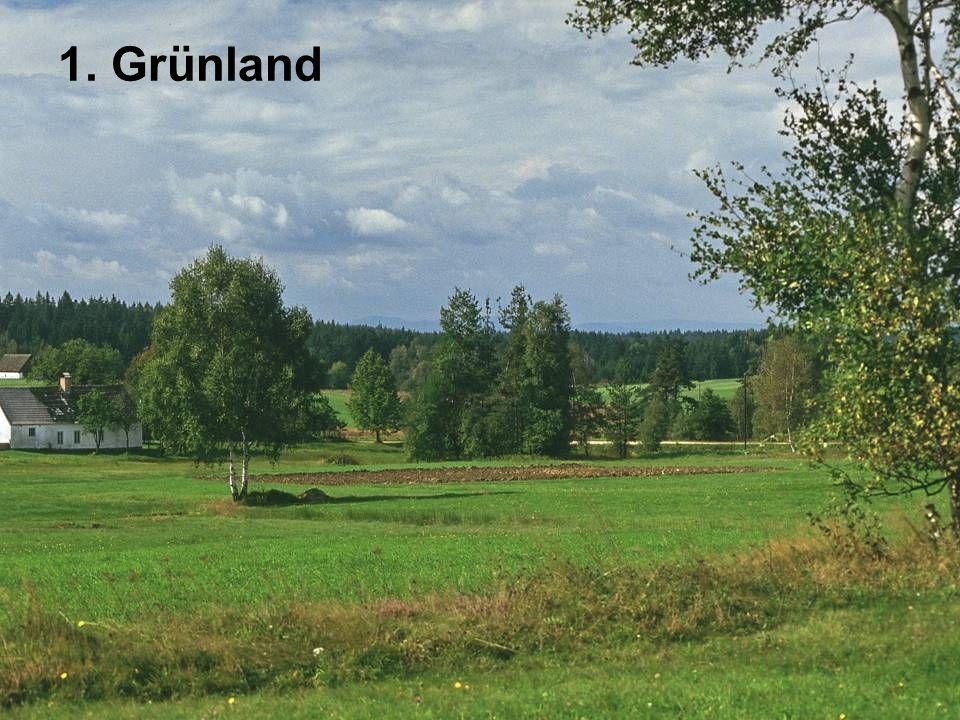 1. Grünland
