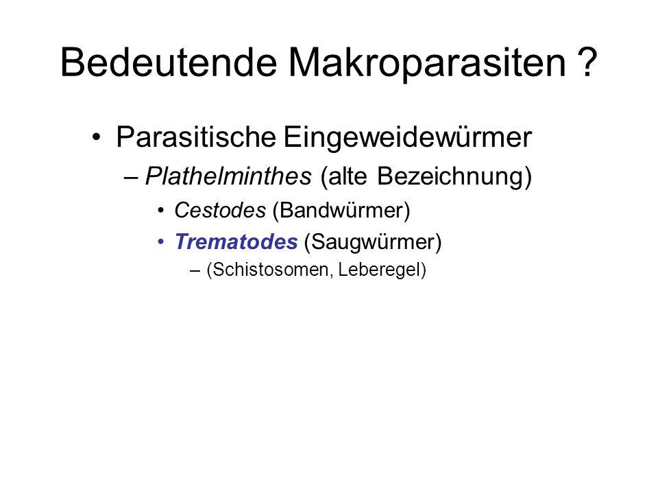 Bedeutende Makroparasiten