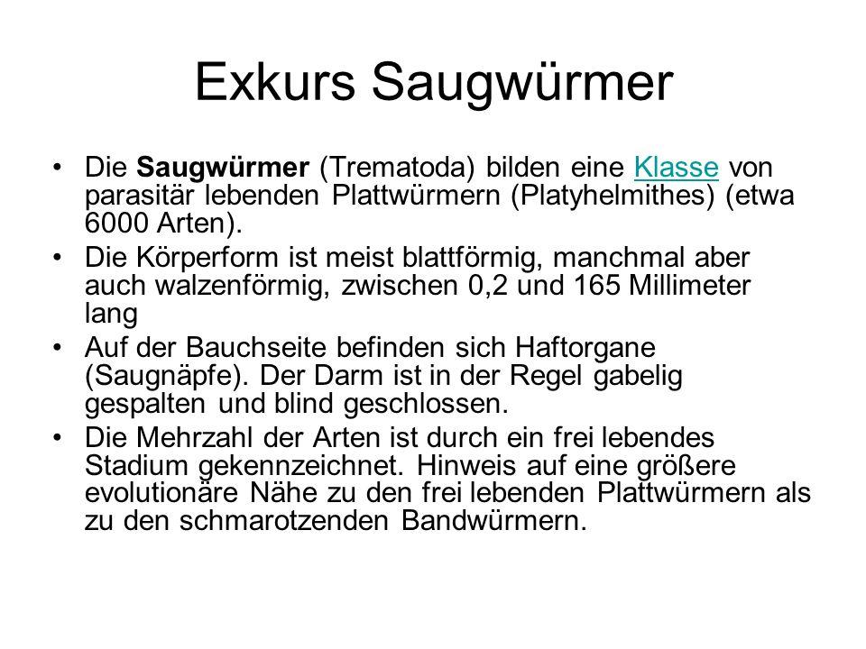 Exkurs SaugwürmerDie Saugwürmer (Trematoda) bilden eine Klasse von parasitär lebenden Plattwürmern (Platyhelmithes) (etwa 6000 Arten).