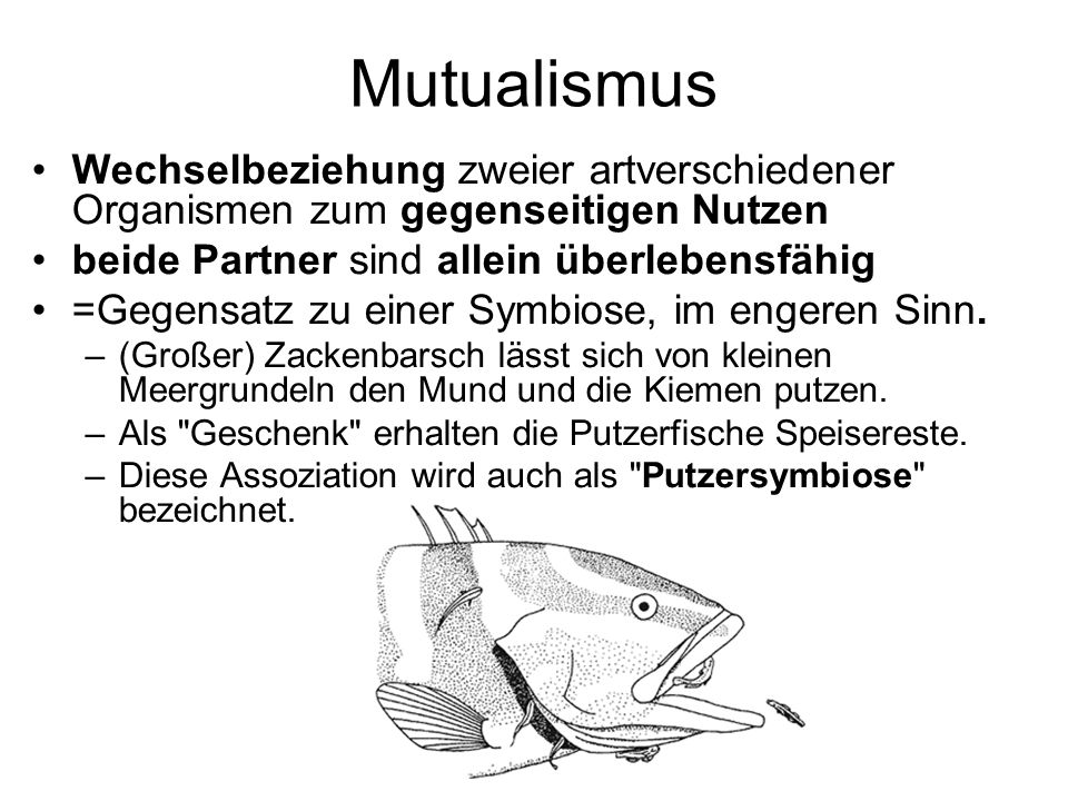 Mutualismus Wechselbeziehung zweier artverschiedener Organismen zum gegenseitigen Nutzen. beide Partner sind allein überlebensfähig.