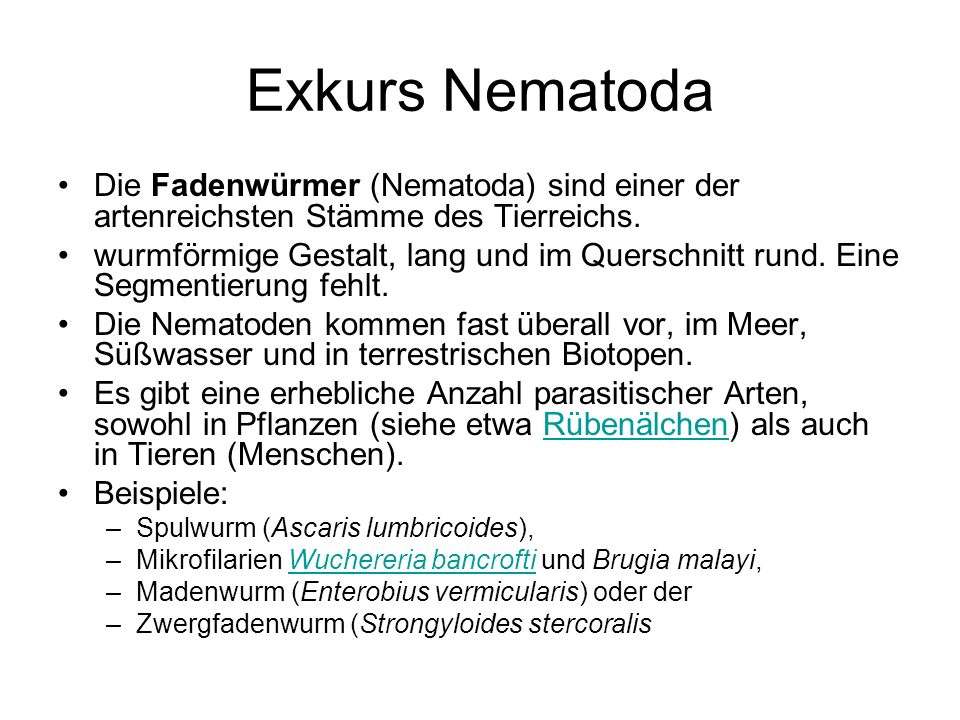 Exkurs Nematoda Die Fadenwürmer (Nematoda) sind einer der artenreichsten Stämme des Tierreichs.