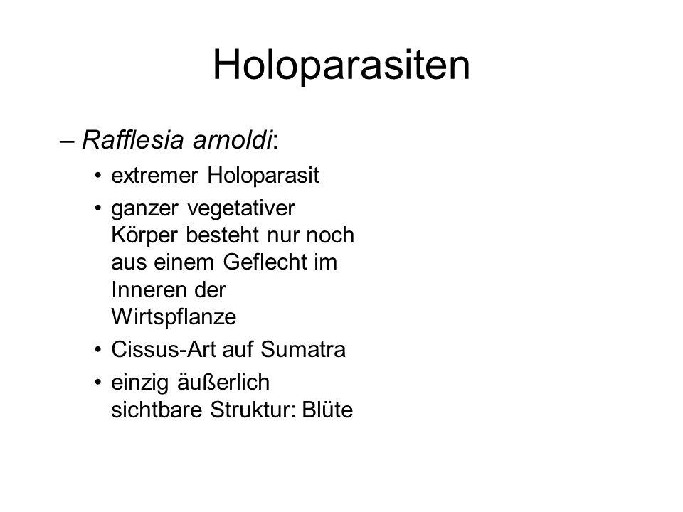 Holoparasiten Rafflesia arnoldi: extremer Holoparasit