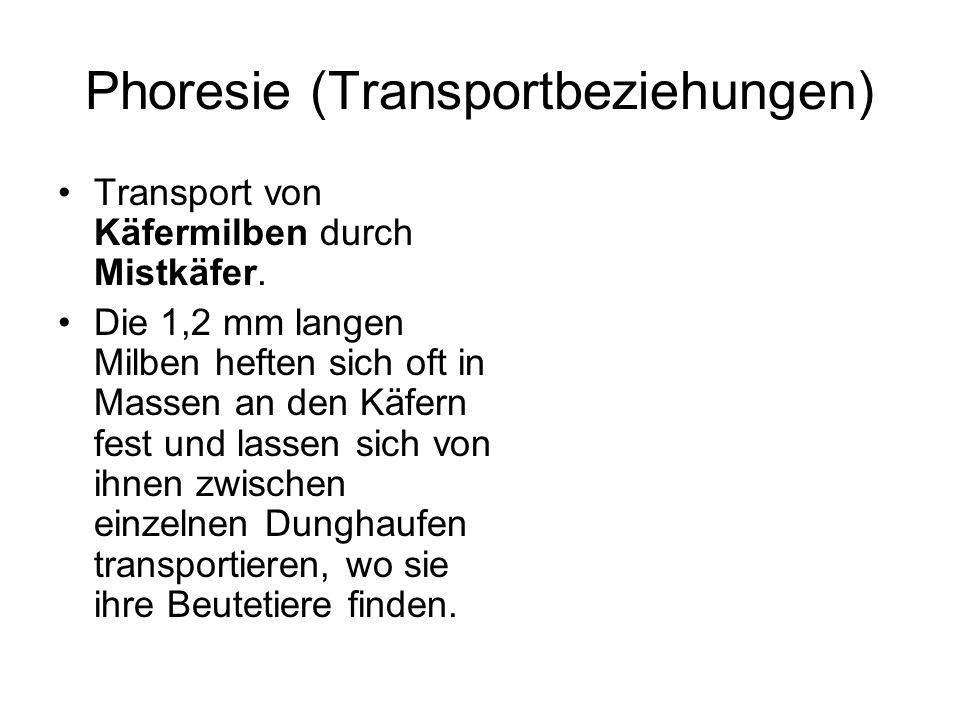 Phoresie (Transportbeziehungen)
