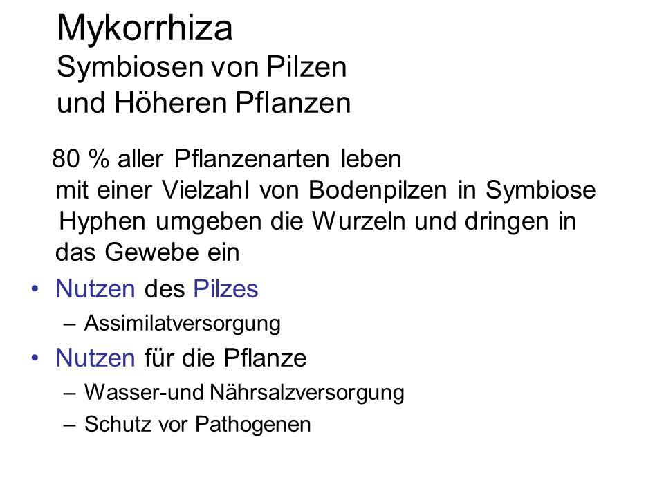 Mykorrhiza Symbiosen von Pilzen und Höheren Pflanzen