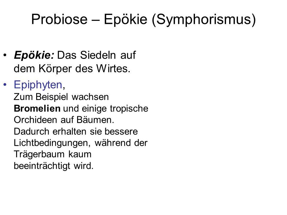 Probiose – Epökie (Symphorismus)