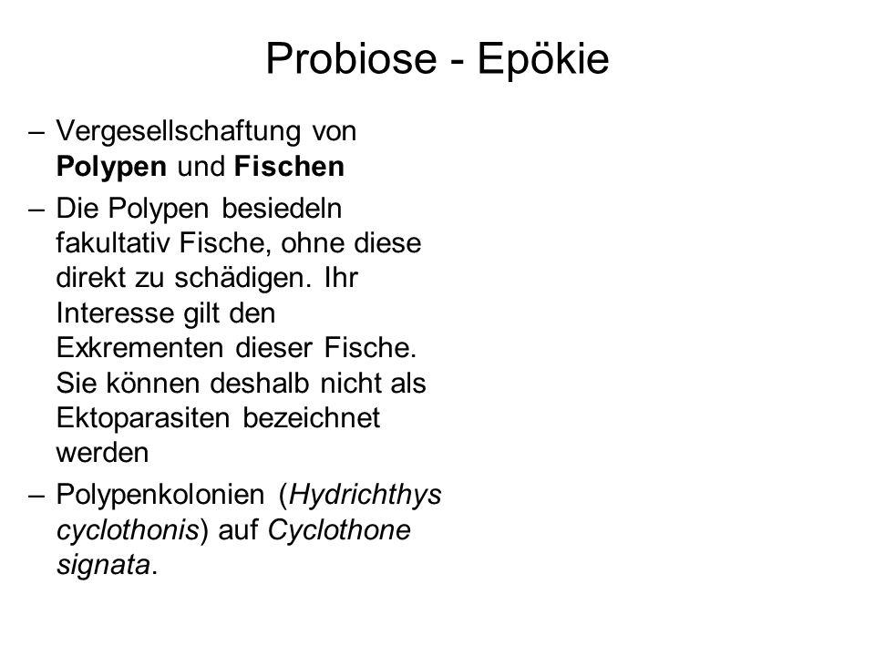 Probiose - Epökie Vergesellschaftung von Polypen und Fischen