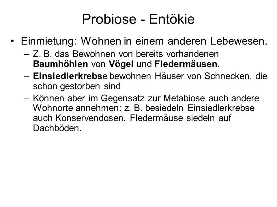 Probiose - Entökie Einmietung: Wohnen in einem anderen Lebewesen.