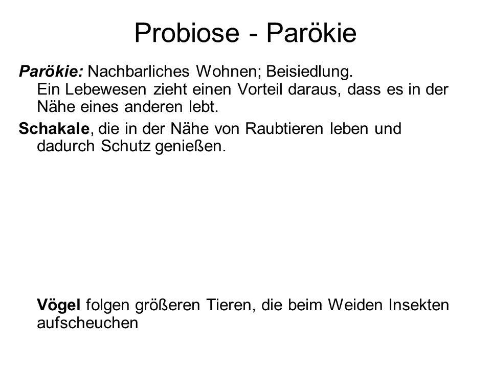 Probiose - ParökieParökie: Nachbarliches Wohnen; Beisiedlung. Ein Lebewesen zieht einen Vorteil daraus, dass es in der Nähe eines anderen lebt.