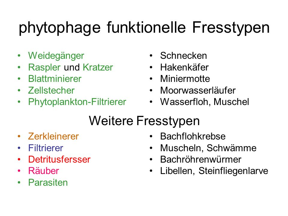 phytophage funktionelle Fresstypen