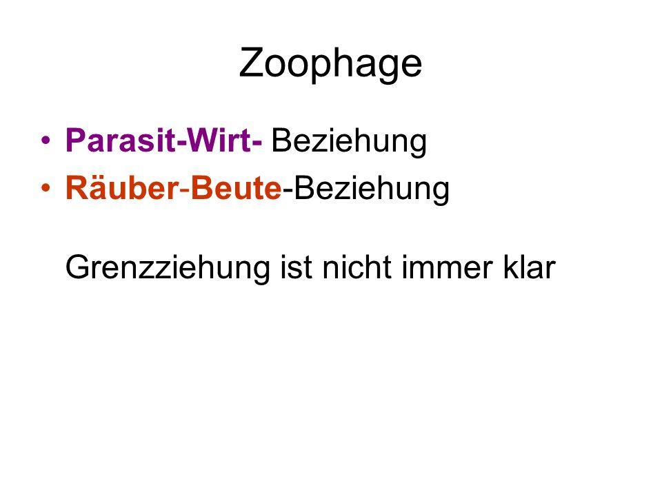 Zoophage Parasit-Wirt- Beziehung