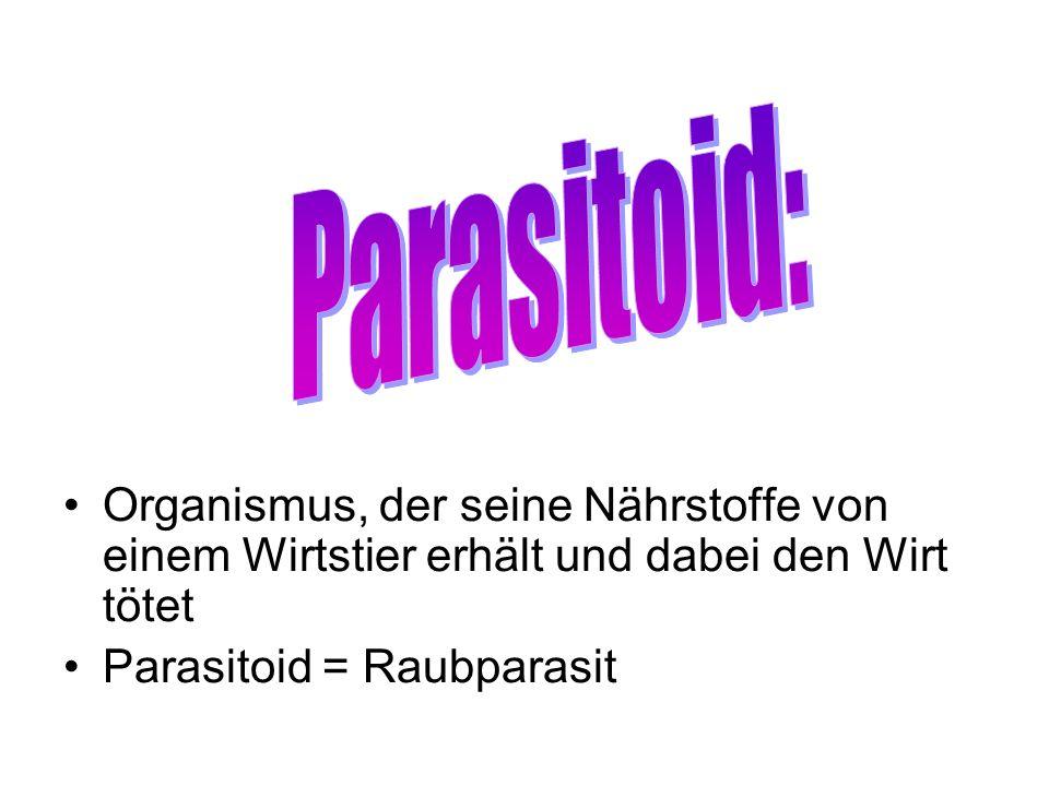 Parasitoid:Organismus, der seine Nährstoffe von einem Wirtstier erhält und dabei den Wirt tötet.