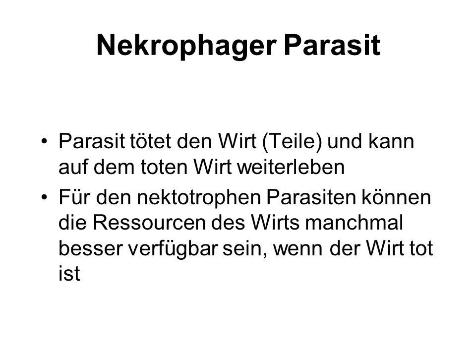 Nekrophager Parasit Parasit tötet den Wirt (Teile) und kann auf dem toten Wirt weiterleben.