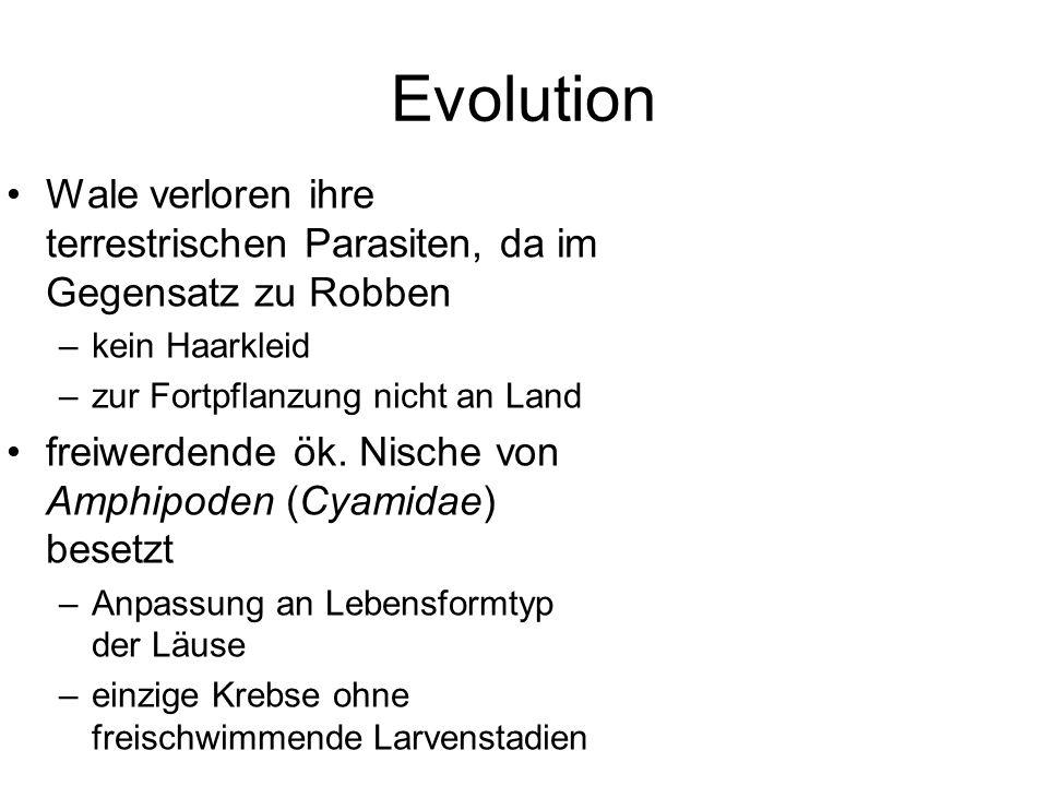 Evolution Wale verloren ihre terrestrischen Parasiten, da im Gegensatz zu Robben. kein Haarkleid. zur Fortpflanzung nicht an Land.