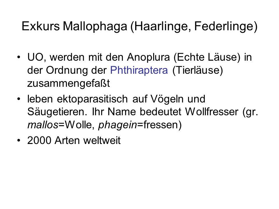 Exkurs Mallophaga (Haarlinge, Federlinge)