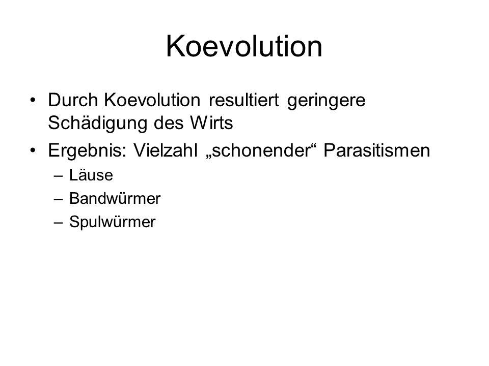 """KoevolutionDurch Koevolution resultiert geringere Schädigung des Wirts. Ergebnis: Vielzahl """"schonender Parasitismen."""