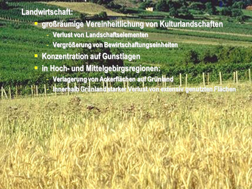 Aufforstung landwirtschaftlicher Nutzflächen
