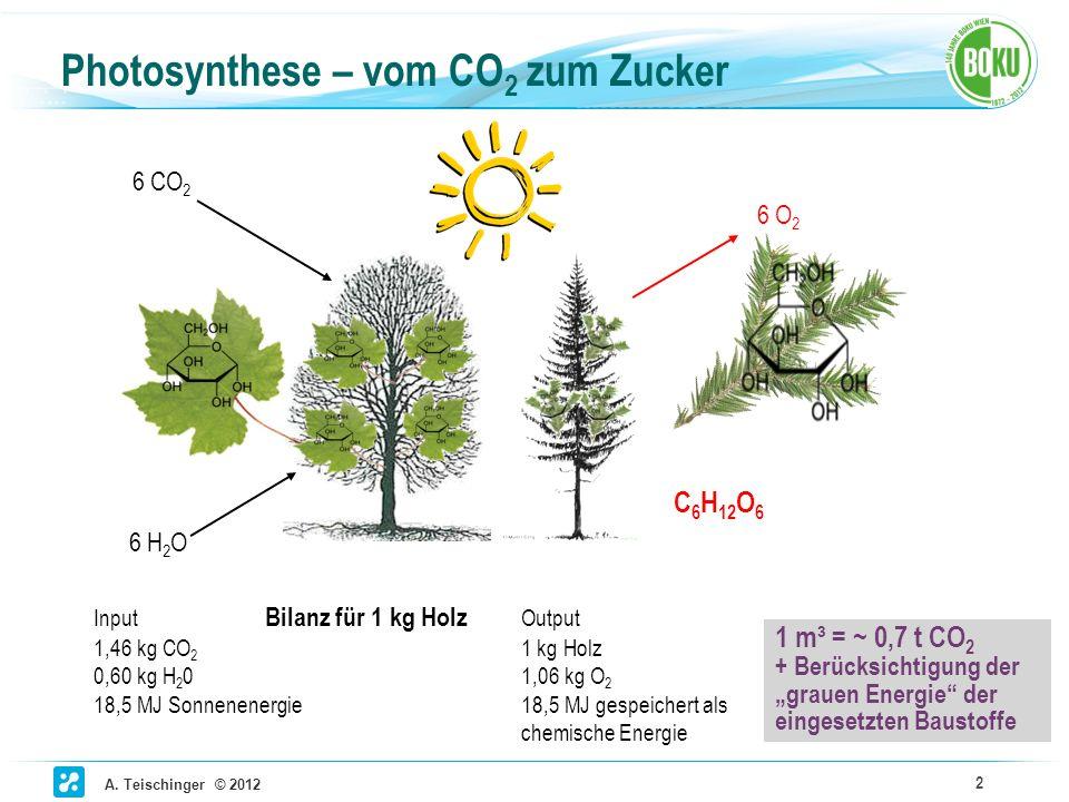 Photosynthese – vom CO2 zum Zucker