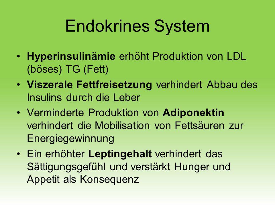 Endokrines System Hyperinsulinämie erhöht Produktion von LDL (böses) TG (Fett)