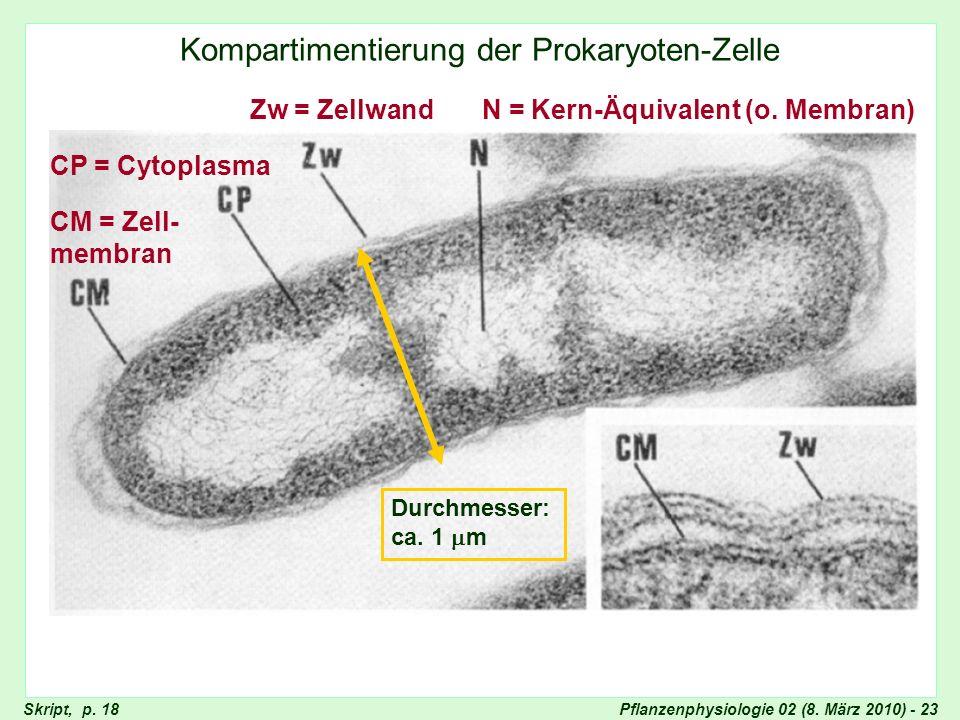 Unkompartimentierte Bakterienzelle