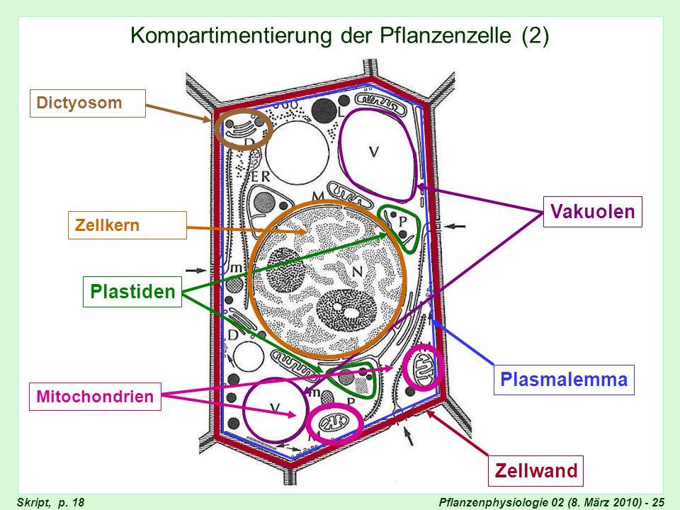 Kompartimentierung der Pflanzenzelle (2)