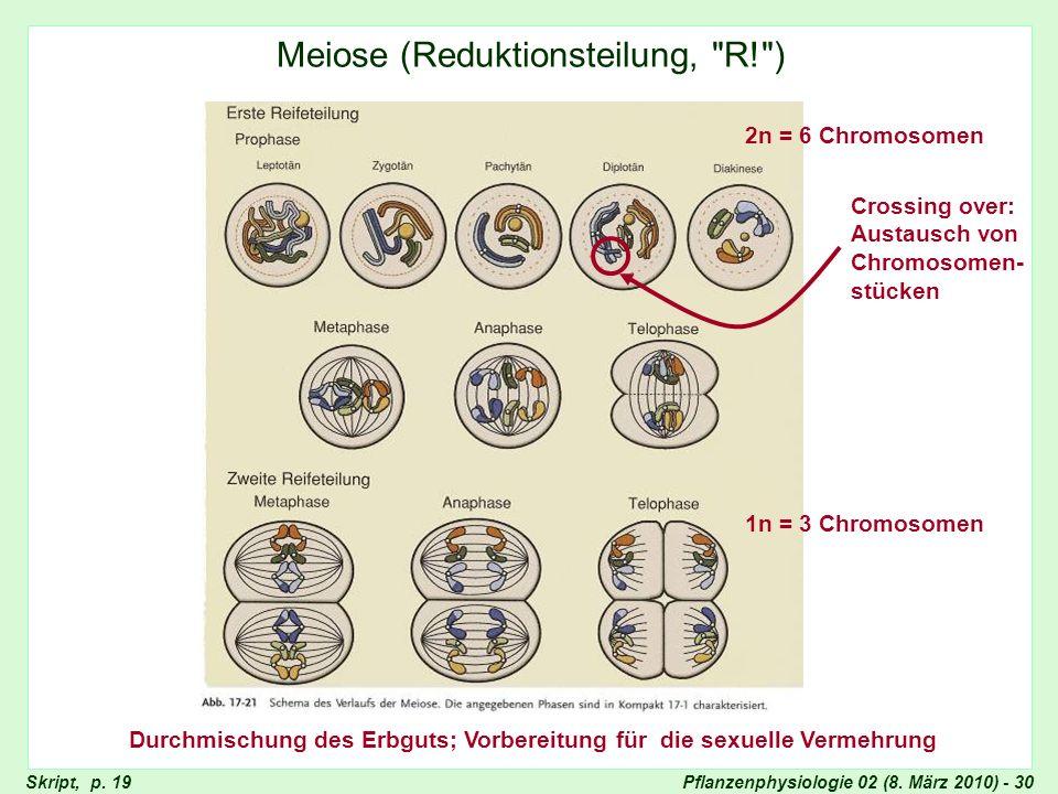 Durchmischung des Erbguts; Vorbereitung für die sexuelle Vermehrung