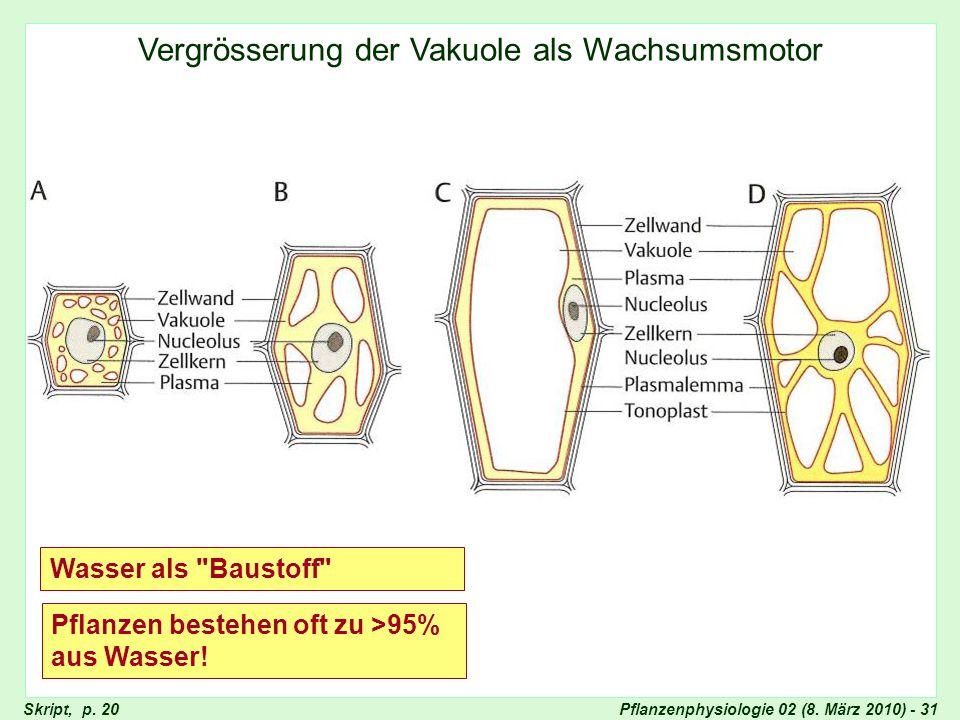 Vergrösserung der Vakuole als Wachstumsmotor