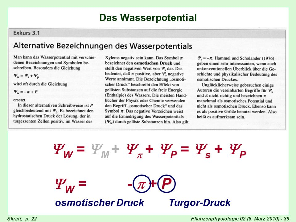 W = M +  + P = s + P W = -  + P Das Wasserpotential