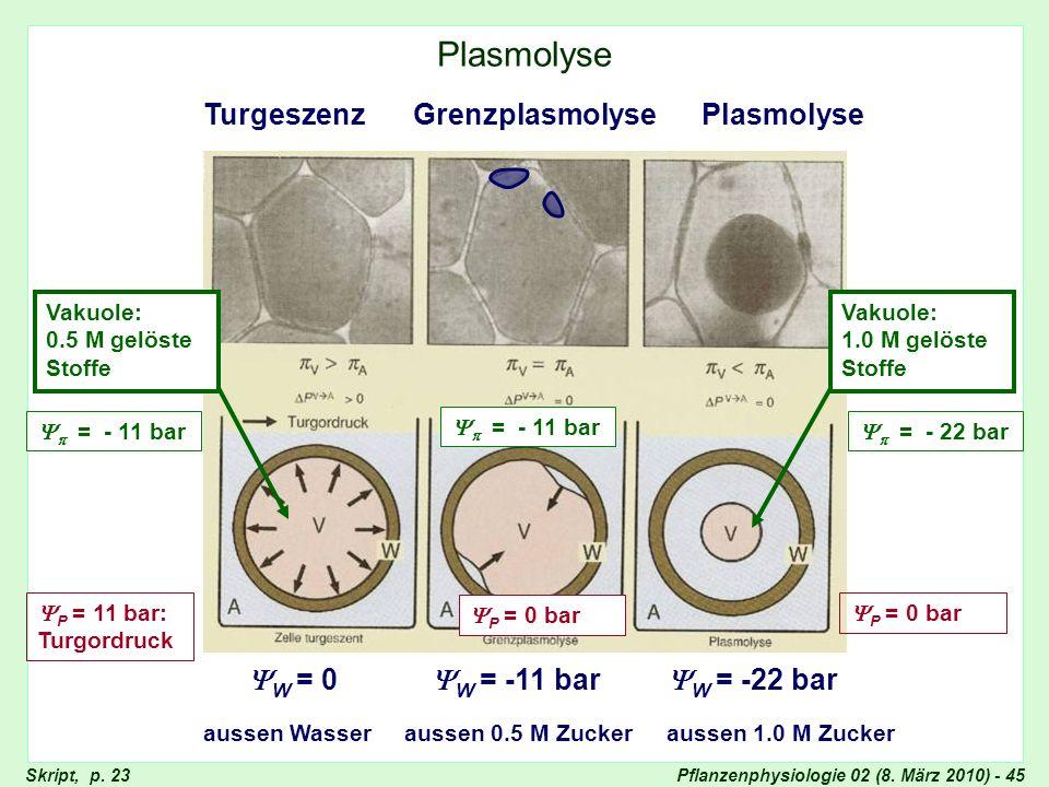 Plasmolyse Turgeszenz Grenzplasmolyse Plasmolyse W = 0 W = -11 bar