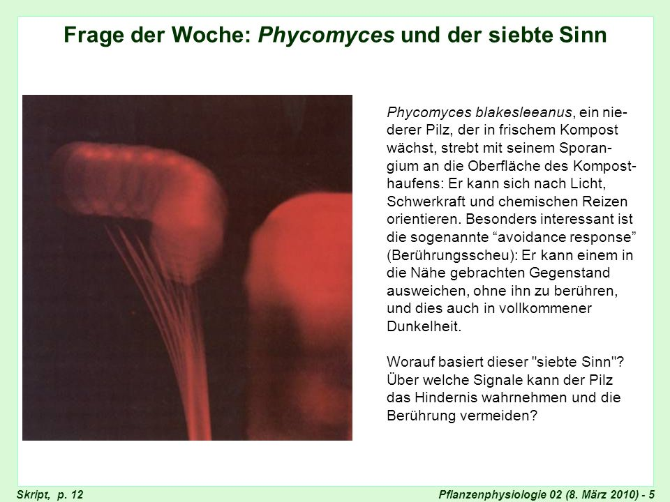 Frage der Woche: Phycomyces
