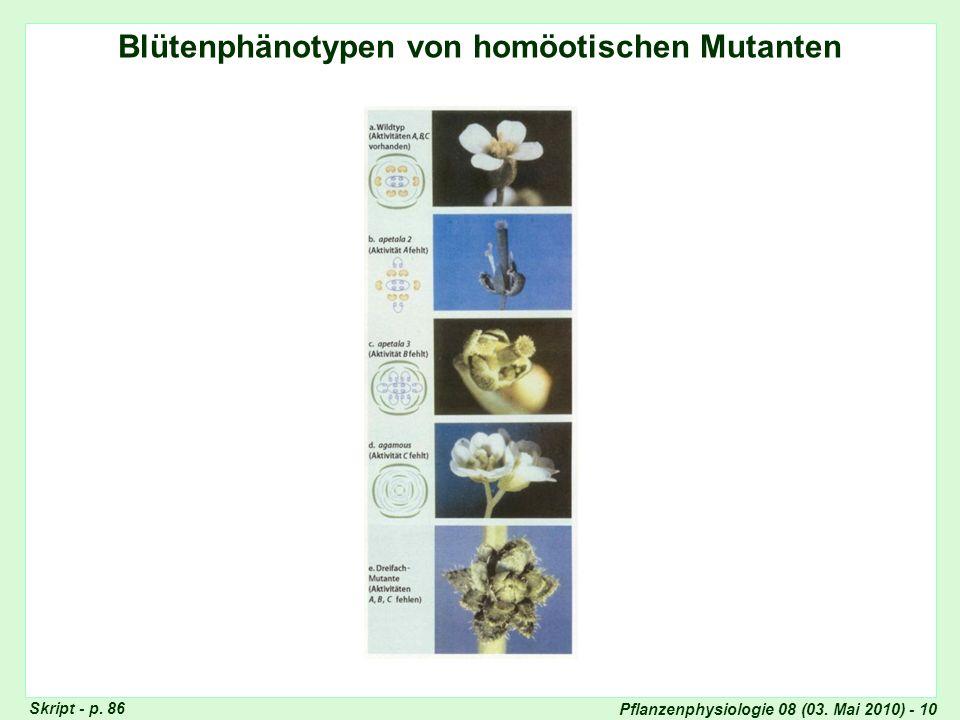 Blütenphänotypen von homöotischen Mutanten
