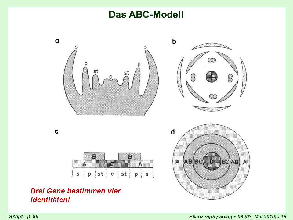 Das ABC-Modell Drei Gene bestimmen vier Identitäten! ABC-Modell