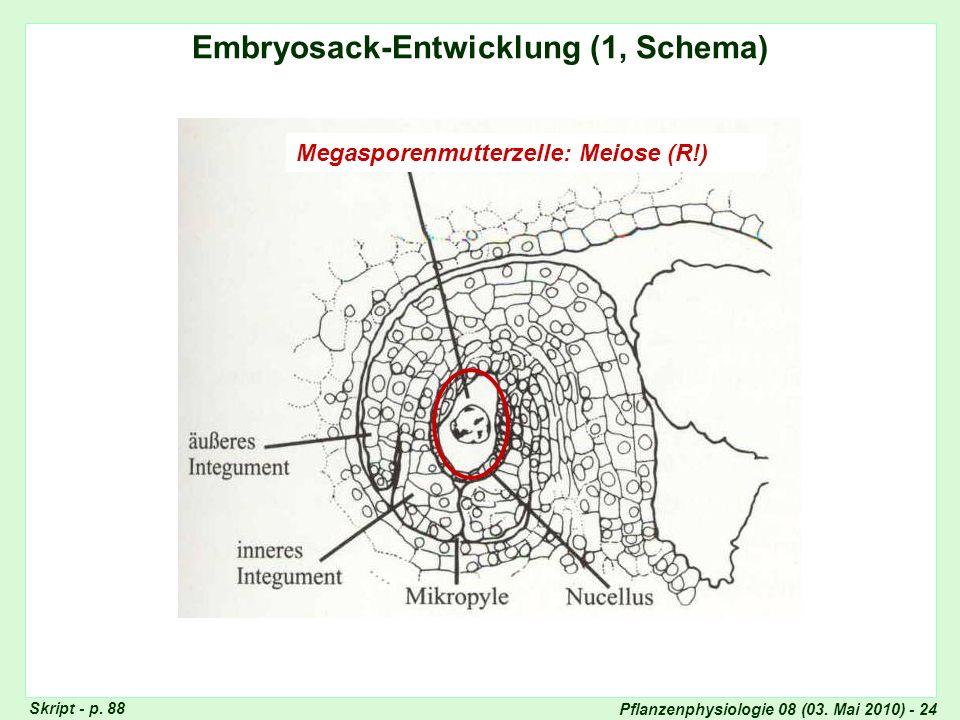 Embryosack-Entwicklung (1, Schema)