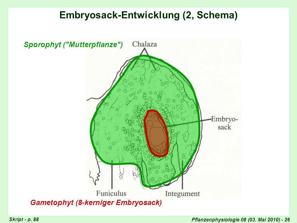 Embryosack-Entwicklung (2, Schema