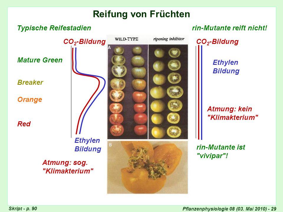 Reifung von Früchten Typische Reifestadien rin-Mutante reift nicht!