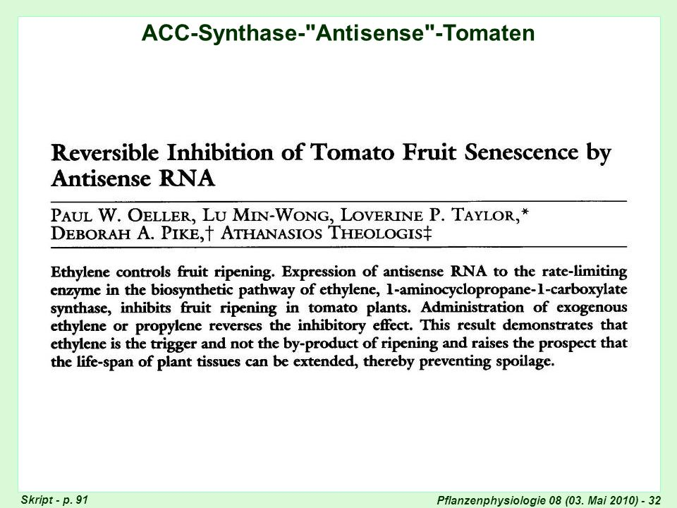 ACC-Synthase-Antisense-Tomaten