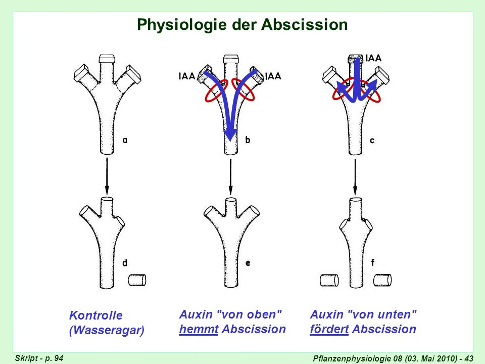 Physiologie der Abscission