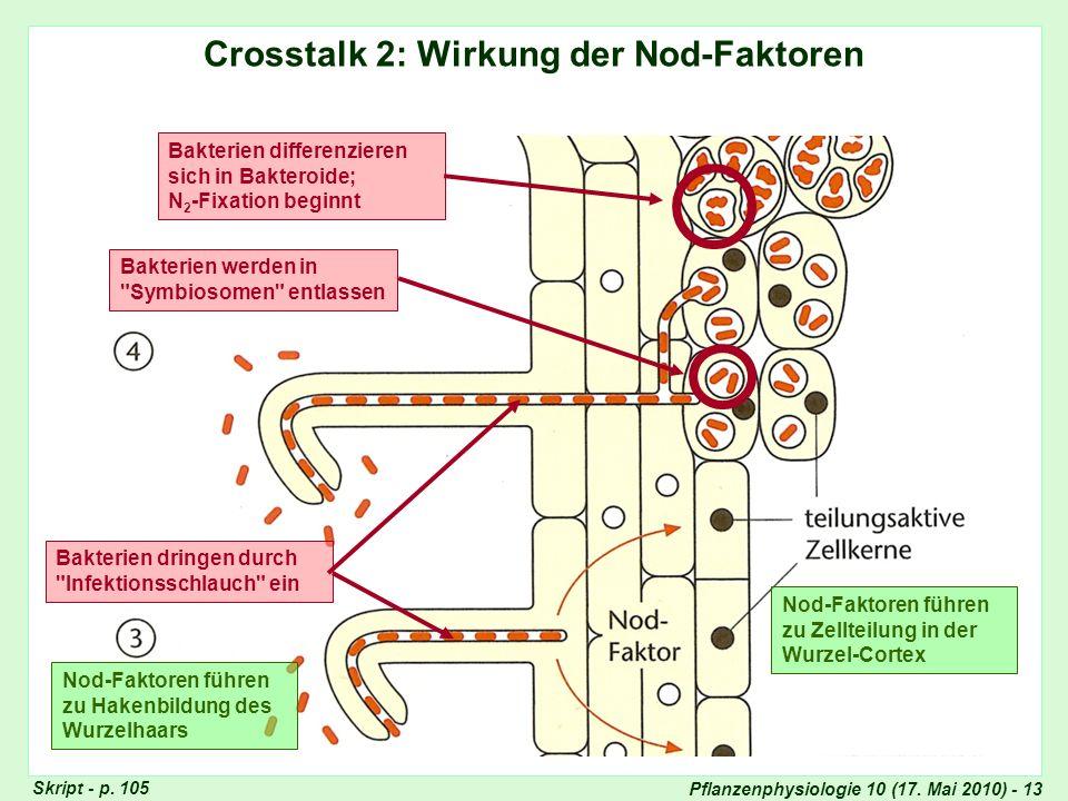 Infektionsschlauch, Bildung von Symbiosomen