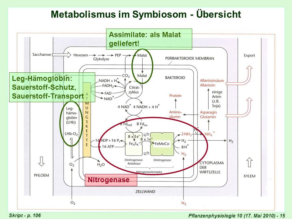 Metabolismus im Symbiosom