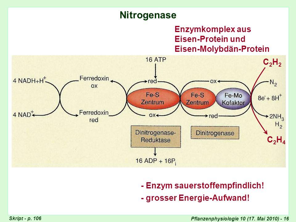 Nitrogenase Enzymkomplex aus Eisen-Protein und Eisen-Molybdän-Protein