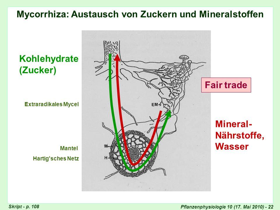 Mycorrhiza: Austausch von Zuckern und Mineralstoffen