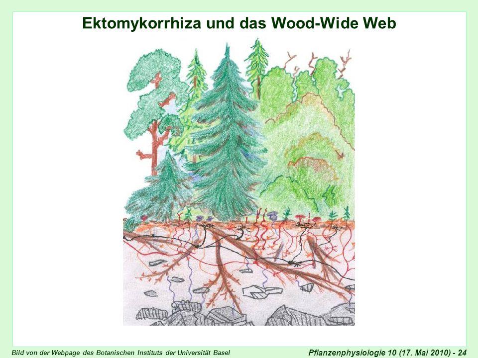 Ektomykorrhiza und das Wood-Wide Web