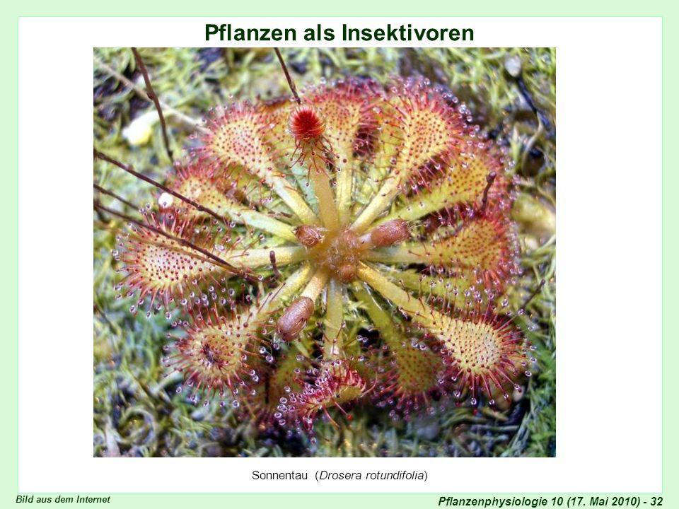 Pflanzen als Insektivoren